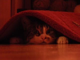 Les aventures de ma chatte...new photo Imgp0810