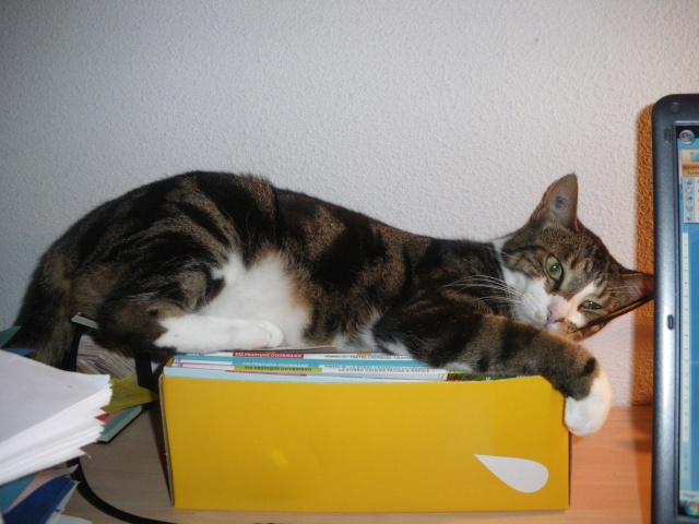 Les aventures de ma chatte...new photo Imgp0911