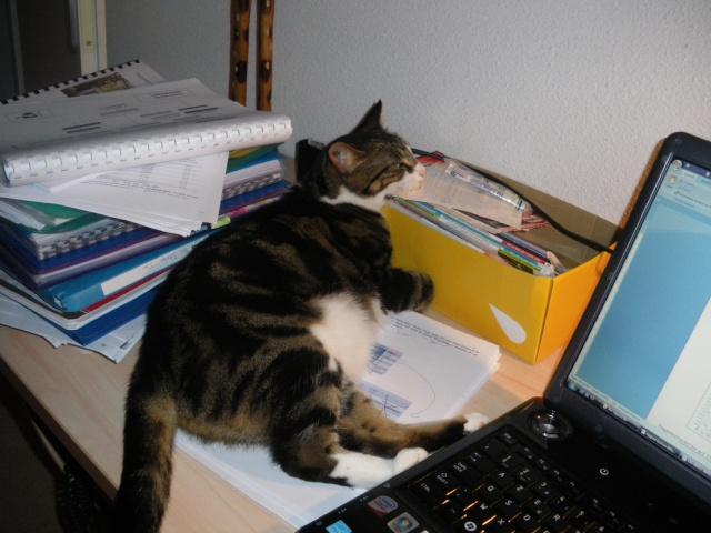 Les aventures de ma chatte...new photo Imgp0912