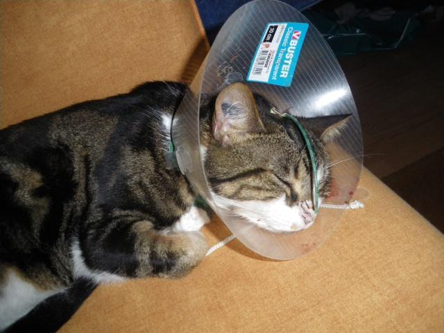 Les aventures de ma chatte...new photo Imgp1110
