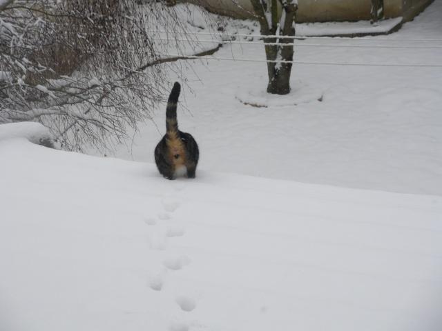 Les aventures de ma chatte...new photo Imgp1111
