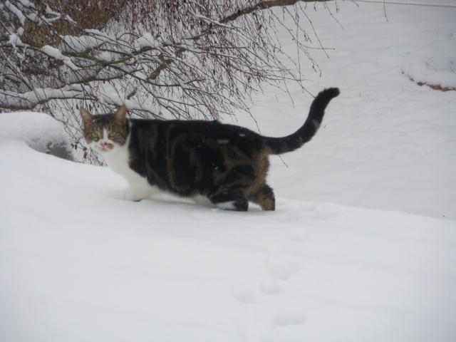 Les aventures de ma chatte...new photo Imgp1112