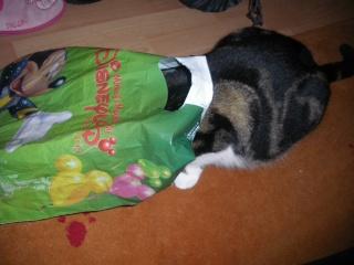 Les aventures de ma chatte...new photo Imgp1113