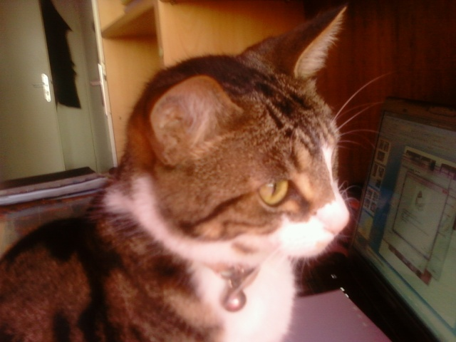 Les aventures de ma chatte...new photo Photo012