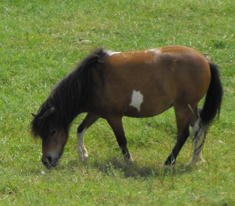 Reg Mares - Minnie World mare + 2x mini horses MAKE AN OFFER Maisa110