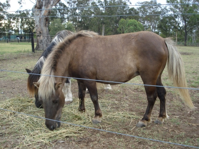 Reg Mares - Minnie World mare + 2x mini horses MAKE AN OFFER Minnie10