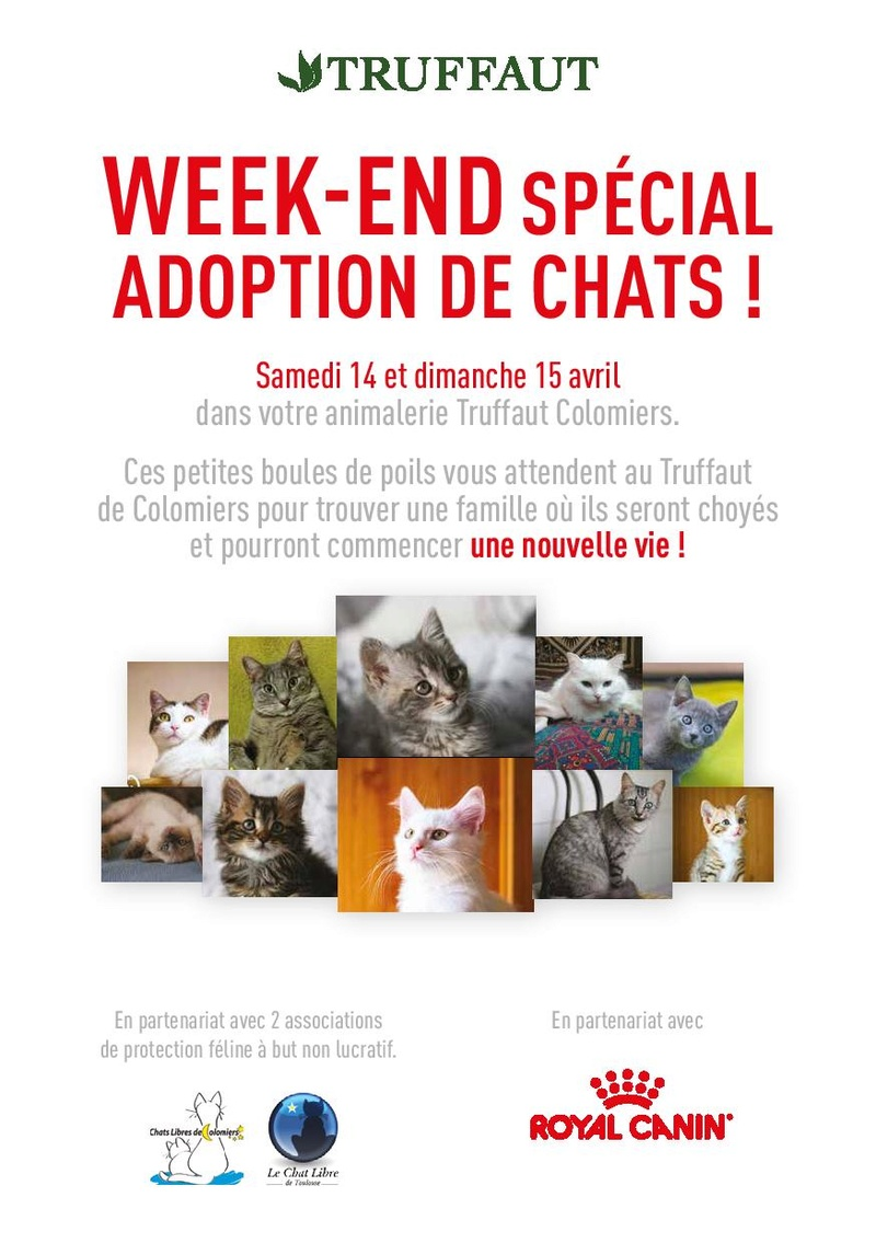 Week-end adoptions 14 et 15 Avril  - Truffaut Colomiers Getfil14