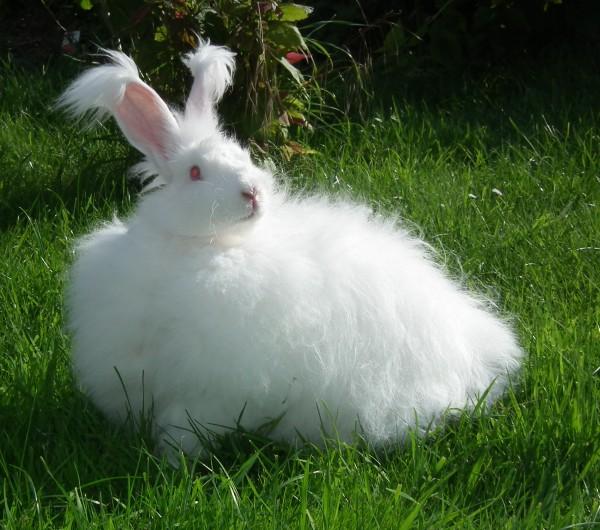 Litière lapin Doucet10