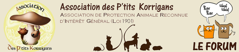Forum de l'Association des P'tits Korrigans