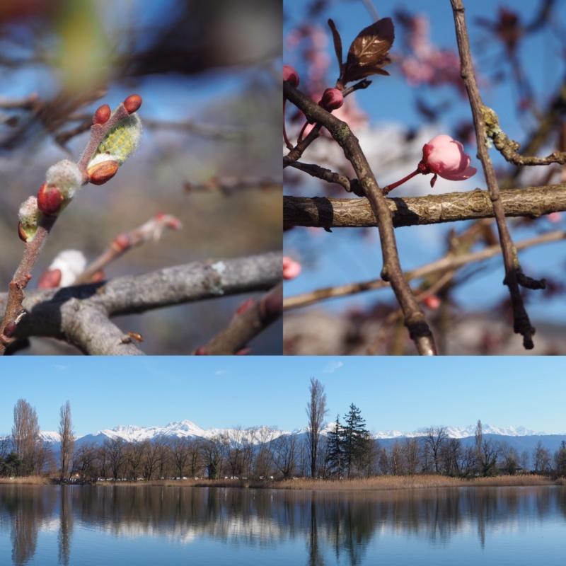Challenge des saisons Printemps : la nature se réveille  788d6e10