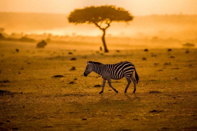 Afrique - Challenge des 12 mois - Juillet Zafct011