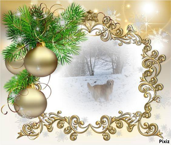 Vote des photos  du concours de Noël. A6538411