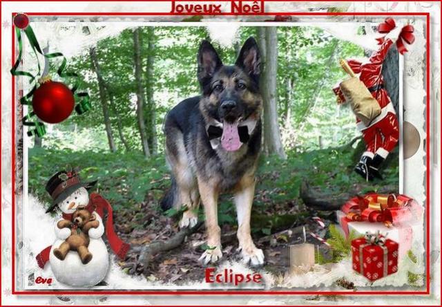 Vote des photos  du concours de Noël. Eclips11