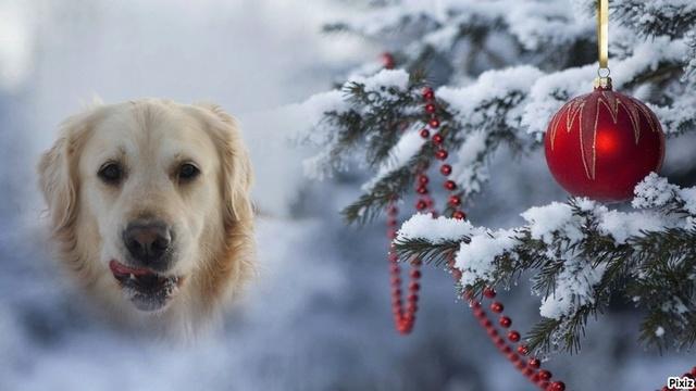 Vote des photos  du concours de Noël. Hisia_10