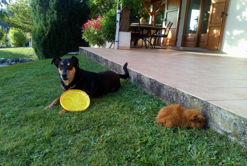 Kami, chien de randonnée - Page 21 _2017011