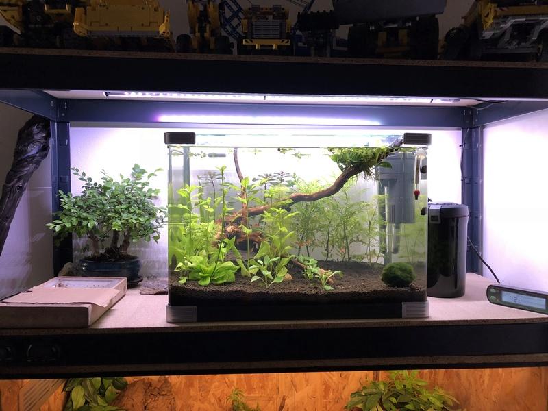 Aquarium de 60l, en début de cycle Img_7911