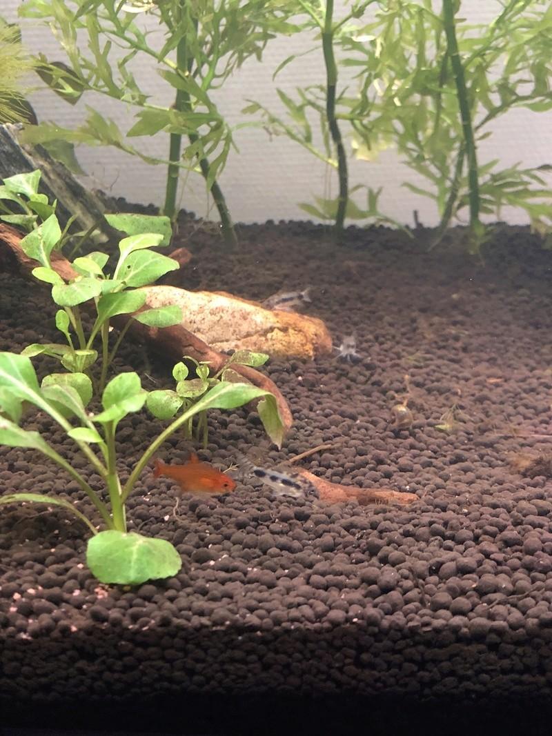 Aquarium de 60l, en début de cycle Img_7915