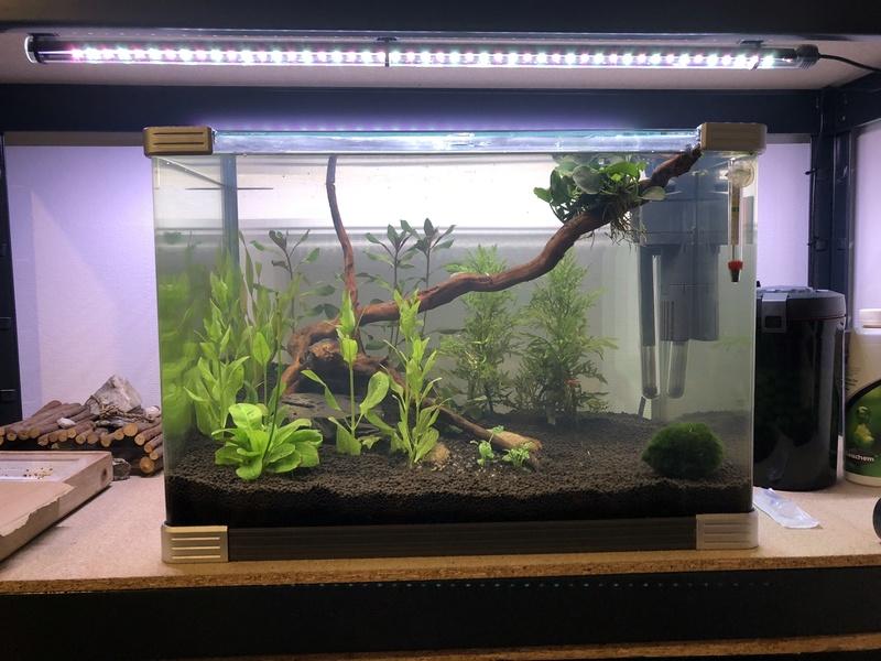 Aquarium de 60l, en début de cycle Vue_gl10