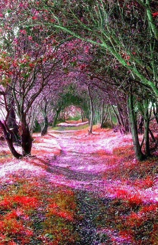Avalon's gardens - Page 36 22282011