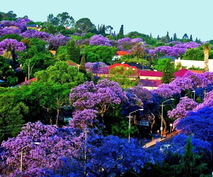 Avalon's gardens - Page 36 26238910