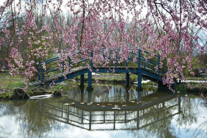 Avalon's gardens - Page 36 30264510