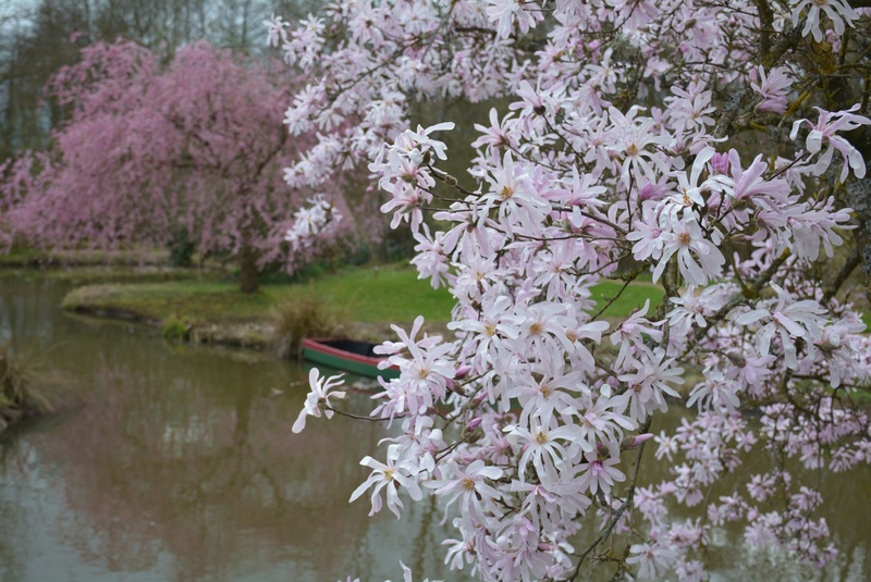 Avalon's gardens - Page 36 30442410