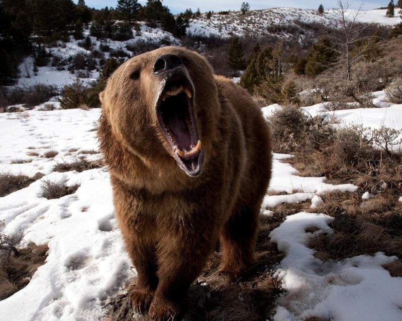 Recette de Noël : la dinde au whisky Grizzl10