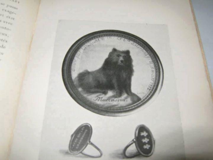 Les chiens de Marie Antoinette - Page 4 Zfers110