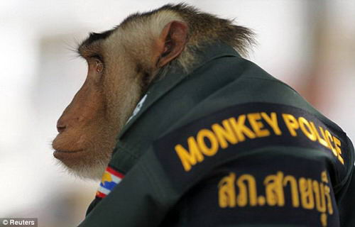 [About Society]The Thai police hire monkey-officers to promote the relationship Img27118