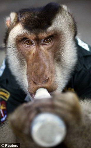 [About Society]The Thai police hire monkey-officers to promote the relationship Img27119
