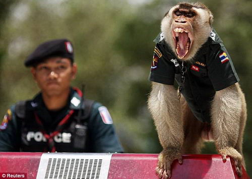 [About Society]The Thai police hire monkey-officers to promote the relationship Img27121