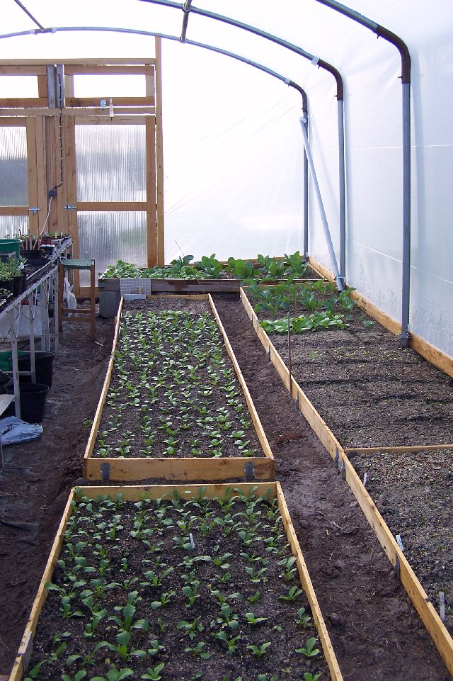 My First Square Foot Garden Tunnel11