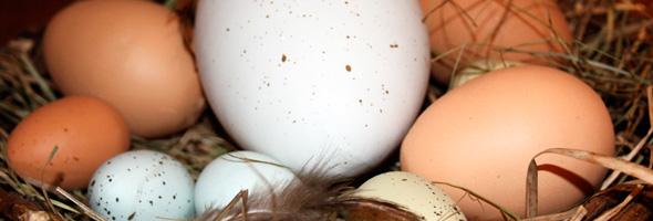¿Cuantos huevos puedo comer? Huevos10