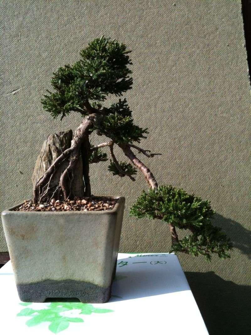 Juniper - Root Over Rock Img_0713