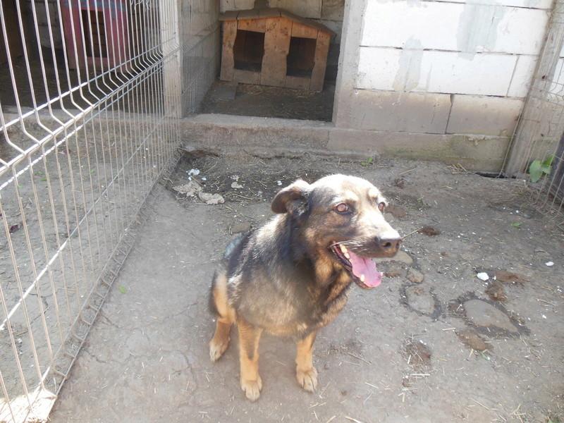 TINNA,  née en 2012 trouvée dans la rue par Lenuta - marrainée par lilirez02 -R-SC 07410