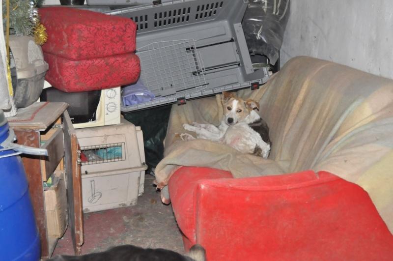IAGOO FILS DE GEORGICA ET D'ANOUSHKA, né le 20 Aout 2010, parrainé par Babsu -SC-LBC- R- SOS -  Daphne10