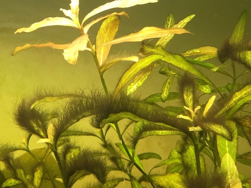 Quelle est cette algue? Img_1611