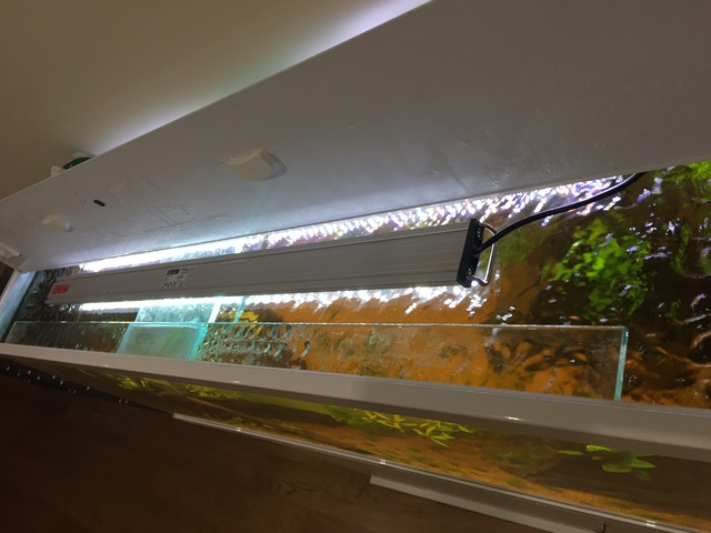 Lancement 300L - Aqualantis Style LED 150 Img_6212
