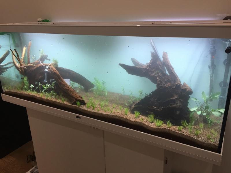 Lancement 300L - Aqualantis Style LED 150 Img_6220