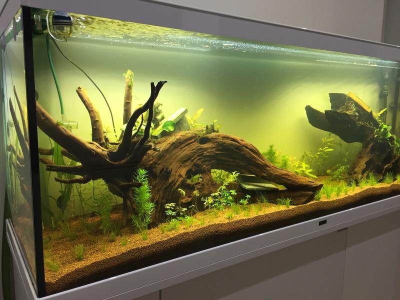 Lancement 300L - Aqualantis Style LED 150 Img_6222