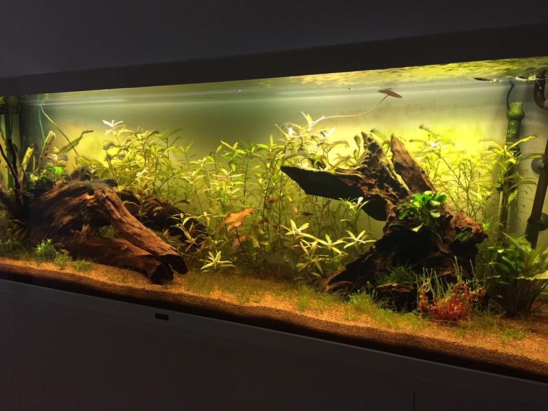 Quelle est cette algue? Img_6710