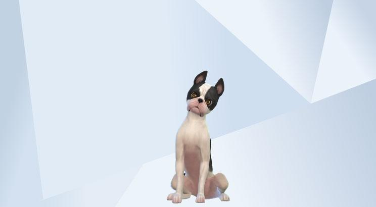 Pet Parade - #TS4CatsAndDogs - Share Thread 0111
