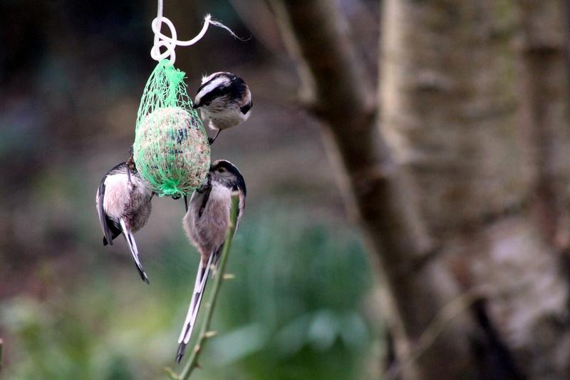 [Ouvert] FIL - Oiseaux. - Page 8 001_co21