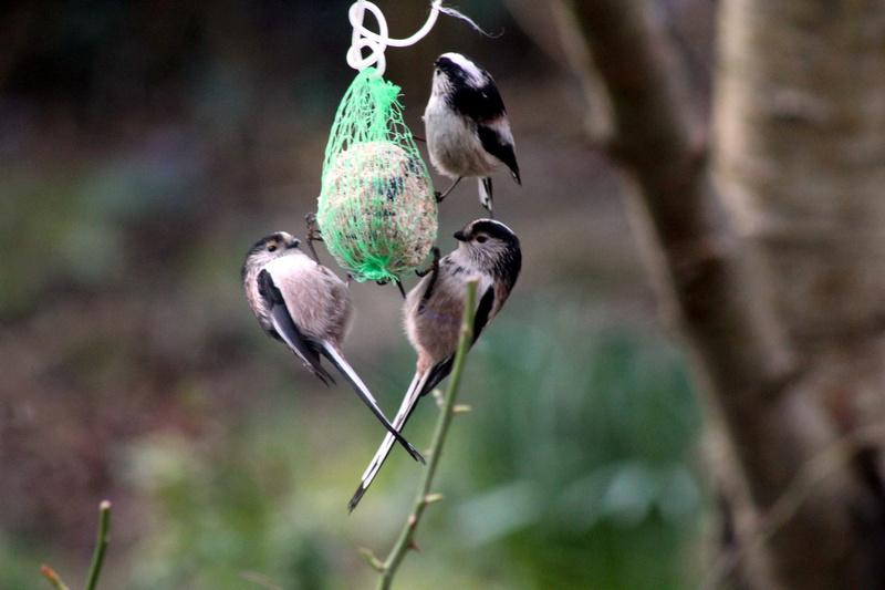 [Ouvert] FIL - Oiseaux. - Page 8 002_co22