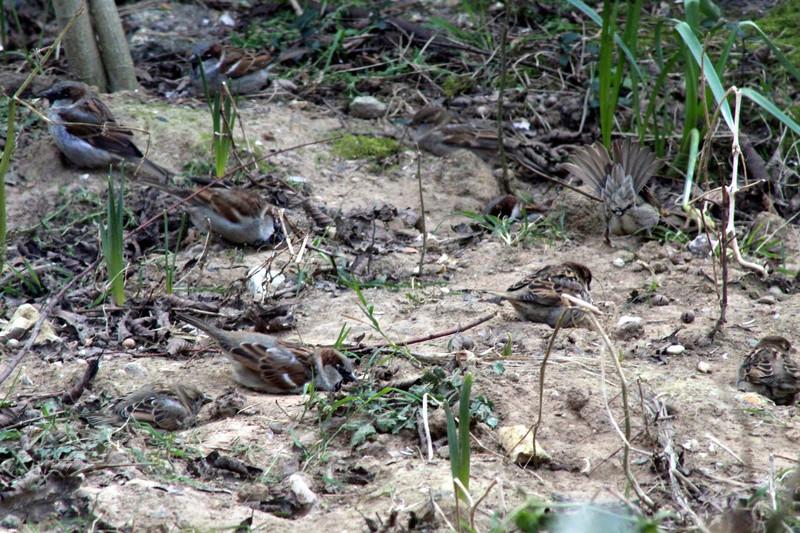 [Ouvert] FIL - Oiseaux. - Page 10 008_co27