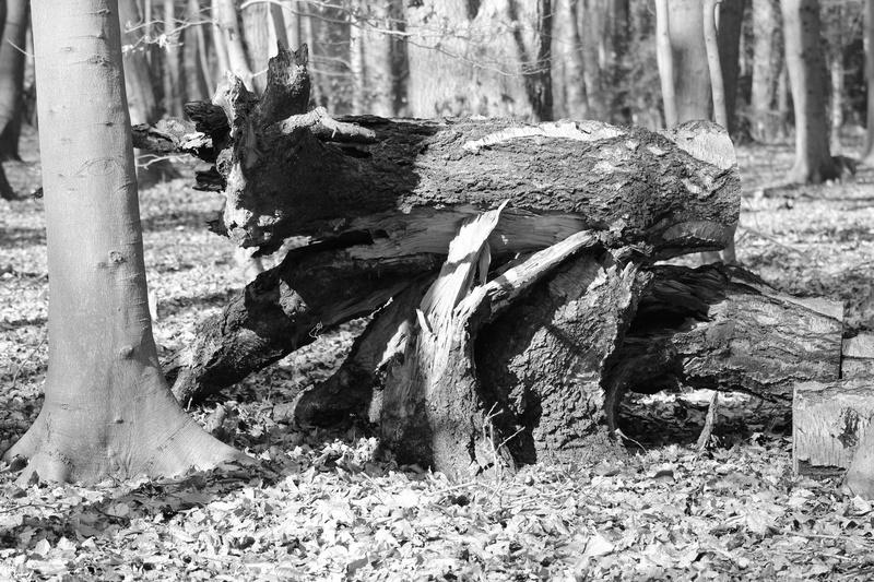 [fil ouvert] la forêt dans tous ses états - Page 18 009_co22