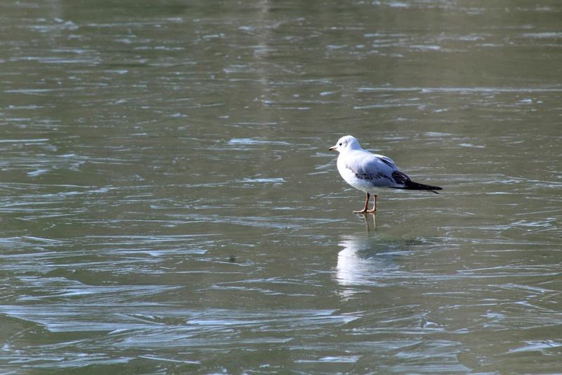 [Ouvert] FIL - Oiseaux. - Page 10 016_co20