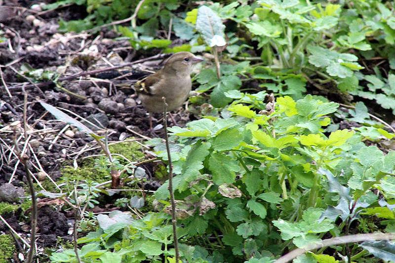 [Ouvert] FIL - Oiseaux. - Page 10 019_co21