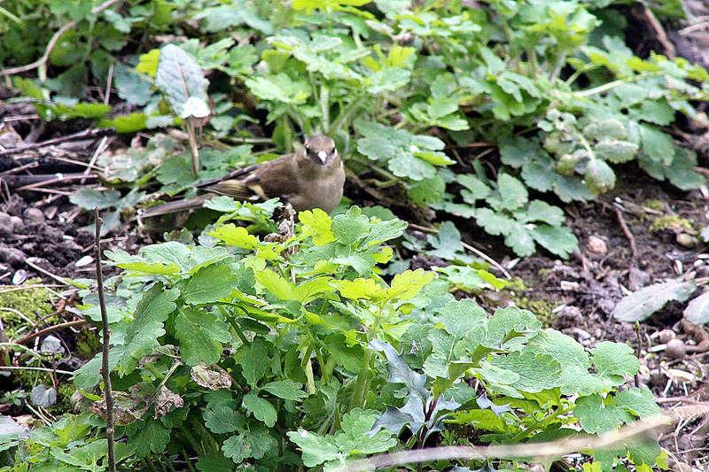 [Ouvert] FIL - Oiseaux. - Page 10 021_co32