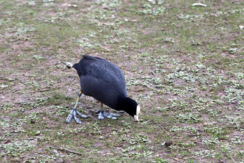 [Ouvert] FIL - Oiseaux. - Page 8 022_co27